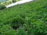 Земельный участок 15 соток (ижс)